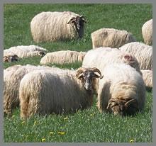 Benta Miguel livestock