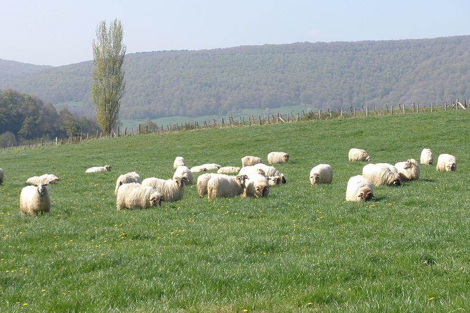 Livestock Benta Miguel